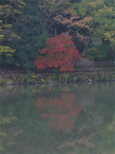 紅葉5.jpg