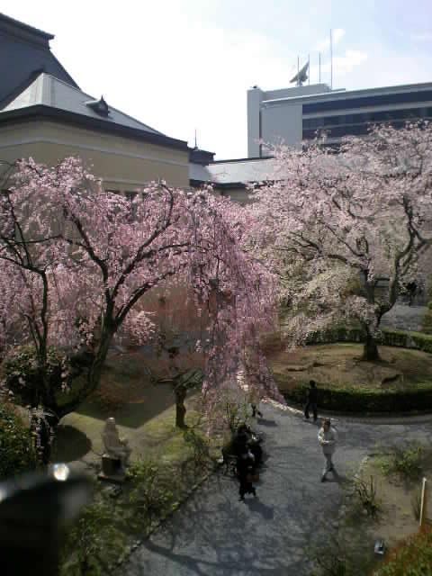 コピー ? 20.04.02府庁桜.JPG