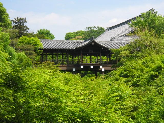 http://www.kyoto-ranzan.jp/news/070508a.JPG